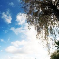 Небо над огородами. Дер.Гачки, Мосальск