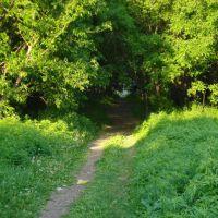 Дорога через лес к Авачинской бухте, Вилючинск