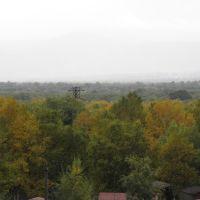 Тайга под балконом, Елизово