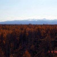 Осенний лес, Атласово