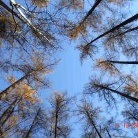 лес_4, Атласово