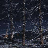 Forêt morte, Крапивная