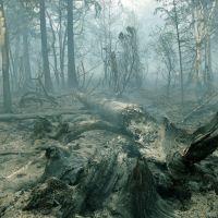 Лес был, Крапивная