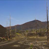 Мёртвый лес, Крапивная