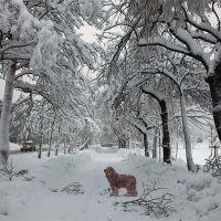 Snow dog, Петропавловск-Камчатский