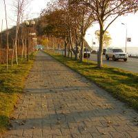 I can hear the cry of the leaf on a tree as it falls to the ground..., Петропавловск-Камчатский