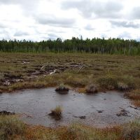 болото, Вирандозеро