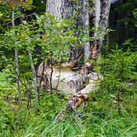 Tricks of the Beaver - Проделки бобров, Вирандозеро