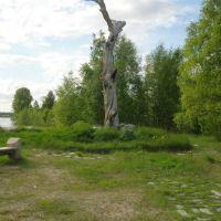 Pine of Lennrot, Калевала