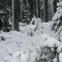 Костомукша.  Первый снег..., Костомукша