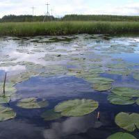заросшее озеро, Лоухи