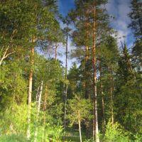 Подводный лес, Муезерский
