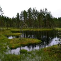 "Rain at the nameless ""176.3 pond"" (Kontiovaara, Ilomantsi, 20120719), Муезерский"