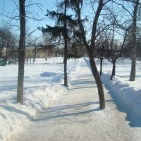 Аллея губернаторского парка