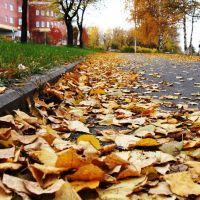 осенью, Анжеро-Судженск
