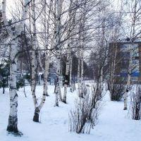 Аллея в  школе №8, Анжеро-Судженск