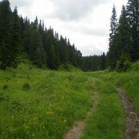 дорога в лес, Барзас