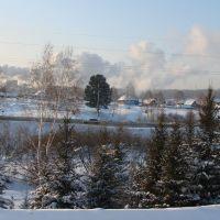 Кедр зимой, Березовский