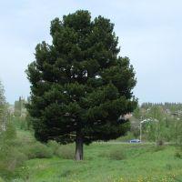 Памятник природы с 2012г., Березовский