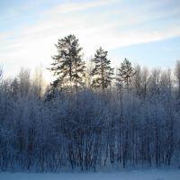 Солнце в декабре у Ижморки, Ижморский