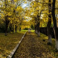 Осень, Кедровка