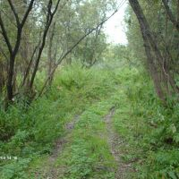 Дорога возле Узкой курьи, Крапивинский
