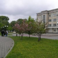 Новокузнецк. Цветущая ... сакура?, сад Металлургов, Новокузнецк