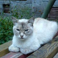 Коты. Отдых у подъезда, Новокузнецк