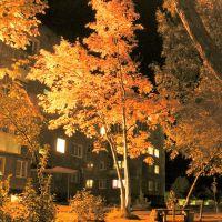 Осеннее золото, Осинники