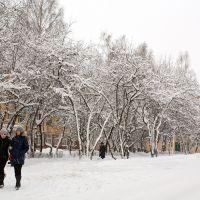 Снегопад, Осинники