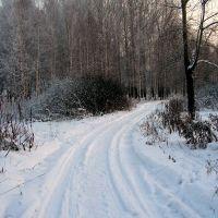 в парке зимой..., Осинники