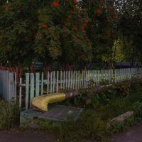 Рябина за забором, сентябрь 2013, Прокопьевск
