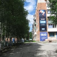 Birches near Nogradsky street., Таштагол
