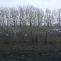 Весна в Яшкино.(Spring in Yashkino.), Яшкино
