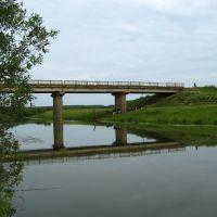 Коровы под мостом у п.Мухино, Богородское