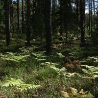 Типичный лес в районе, Богородское