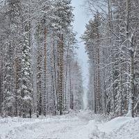 Дорога Бронникова, между двумя Волосницами, Боровой
