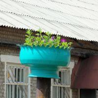 Клумба на воротах, Зуевка