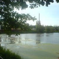 Левый берег пруда, Ленинское