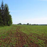 Вид в сторону д.Кусакины, Нововятск