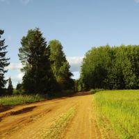 Лес на вершине холма, Нововятск