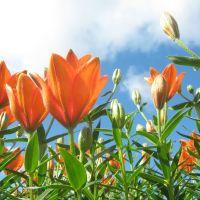 Flowers, Оричи