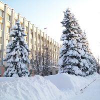 Ели у Белого дома, Слободской
