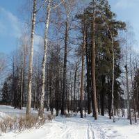 Лыжня в парке, Слободской