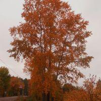 Дерево, Фаленки
