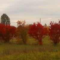 Осенние деревья, Фаленки