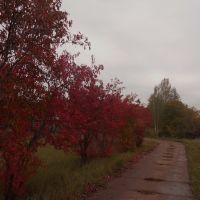 Осенняя тропа, Фаленки