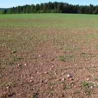 Известковое поле, Халтурин