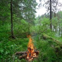 Лесная грелка :: Fire in wood, Водный