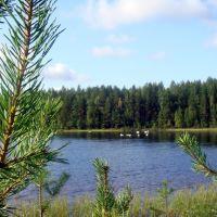 Белое озеро  п.Синдор  Республика Коми, Вожаель